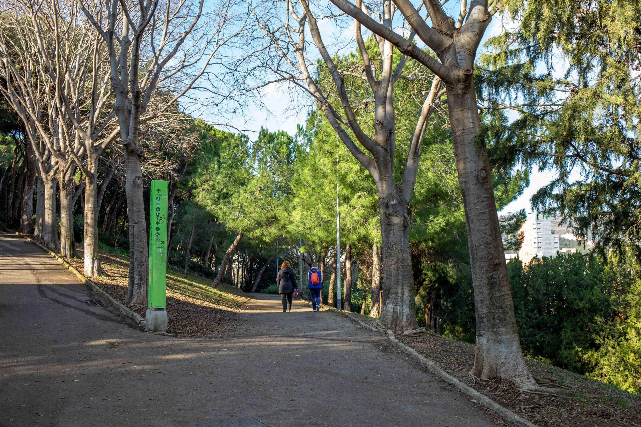 Dones passejant gossos a un parc